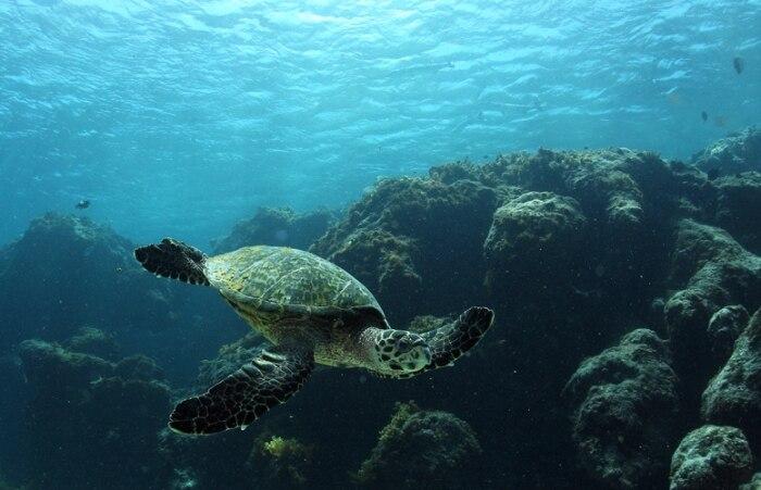Atol das Rocas é a unidade de conservação marinha mais antiga do País