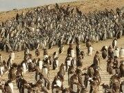 Ilhas Malvinas, o refúgio dos pinguins