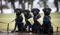 Detentas dos EUA treinam cachorros para ajudar pessoas doentes