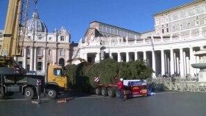 Árvore de Natal do Vaticano já está na Praça...