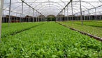 AgriculturaSP/Reprodução