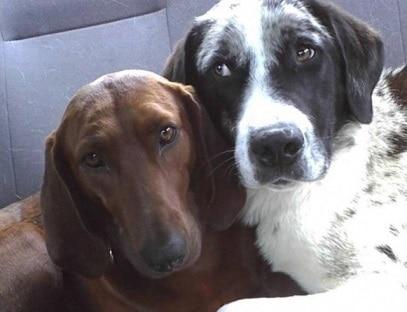 Cadela recusa adoção sem que seu amigo seja adotado também
