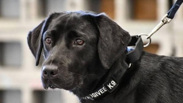 Cadela é dispensada da CIA por falta de interesse no trabalho