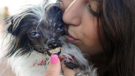 Vira-lata é eleito o cão mais feio do mundo