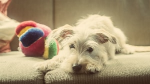 A difícil tarefa de conciliar viagens com animais de estimação - Lucas Biffi/ Divulgação