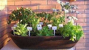 Aprenda a fazer uma horta em casa ocupando pouco espaço - Horta Zen