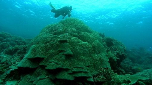Acidificação de oceanos poderá causar prejuízo anual de US$ 1 trilhão - Reuters