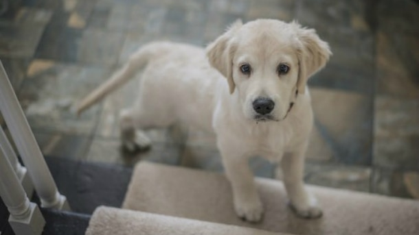 Pixabay - Dicas para o seu cão parar de morder