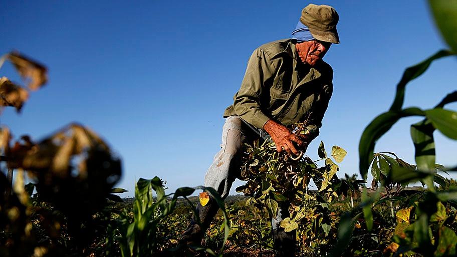 Desmond Boylan/AP - O fazendeiro Diogenes Cheveco, 73, cultiva feijão em terras do governo nos arredores de Havana, em Cuba. Foto: Desmond Boylan/AP