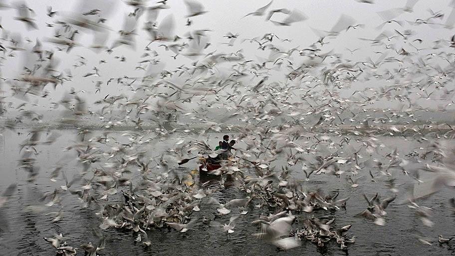 Ahmad Masood/Reuters - Pescadores atravessam o rio Yamuna na manhã fria de hoje, em Nova Delhi, na Índia. Foto: Ahmad Masood/Reuters