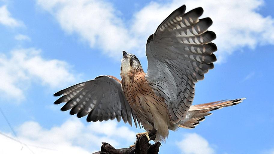 - Diversas espécies serão expostas na Semana Nacional das Aves, em Melbourne. Foto: Julian Smith / EFE