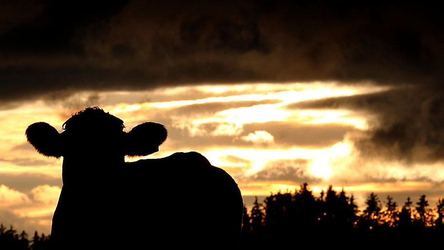- Uma vaca é vista, contra nuvens de chuva, em Genachhausen, no sul da Alemanha. Foto: Karl-Josef Hildenbrand / AP