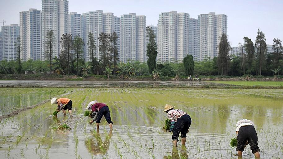 Stringer/Reuters - Agricultores trabalham em um campo de arroz  perto de um complexo residencial em Shaxi, na China. Foto: Stringer/Reuters