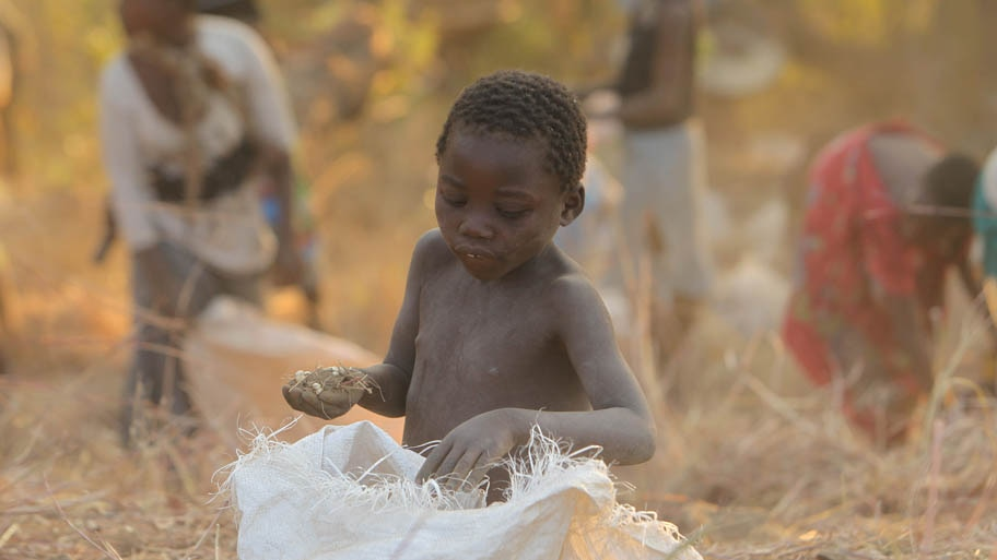 - Garoto recolhe grãos caídos de um caminhão que se acidentou no Malaui, África . Foto: Tsvangirayi Mukwazhi/AP