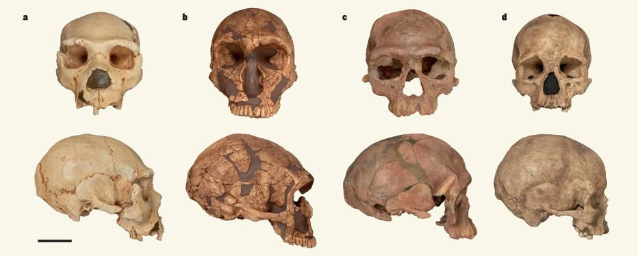 Homo sapiens de 300 mil anos
