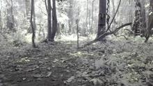 Câmera do Projeto Providence flagra lagarto na Amazônia