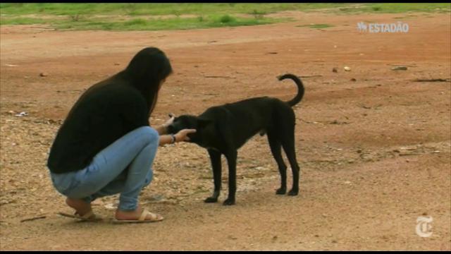 O comércio de pele de cachorro na Tailândia