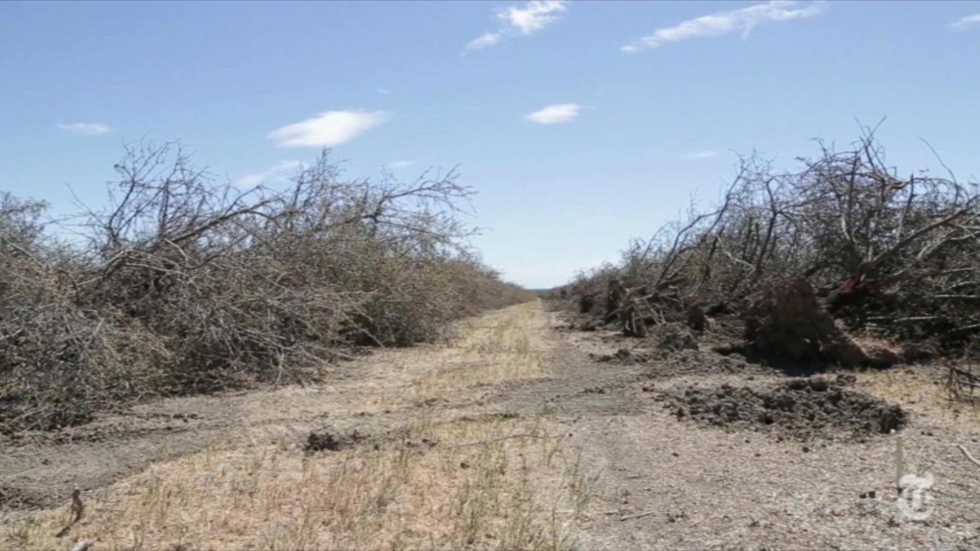 Seca: um problema que destrói a Califórnia