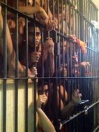 Em junho, Pedrinhas estava com 45% a mais de presos, além de sua capacidade de 1.786 vagas