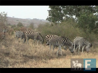 Kruger Park: A maior reserva natural da África do Sul