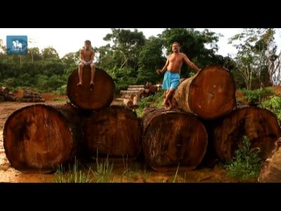25 anos após morte de Chico Mendes, economia do Acre ainda depende do desmatamento