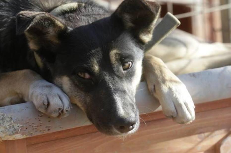 Projeto quer liberar animais em hospitais para visitar pacientes
