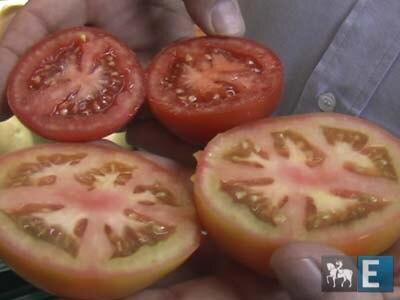 Todas as cores do tomate