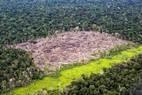 Desmatamento na Amazônia avança