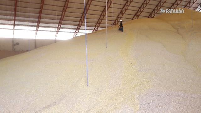 Super safras de grãos derrubam os preços