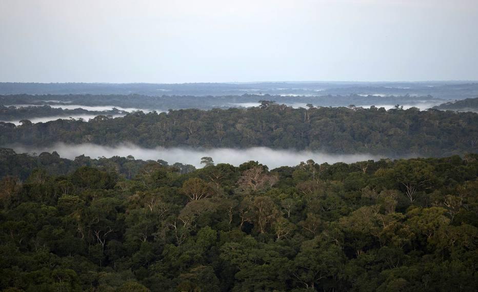 """Estudo mostra que o setor produtivo """"ganhou"""" pelo menos 41 milhões de hectares de terras há cinco anos, quando foi modificada a principal lei que rege a proteção da natureza em áreas privadas, o Código Florestal"""