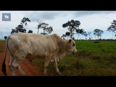 """Caso suspeito de """"doença da vaca louca"""" surge no sudoeste do Mato Grosso"""