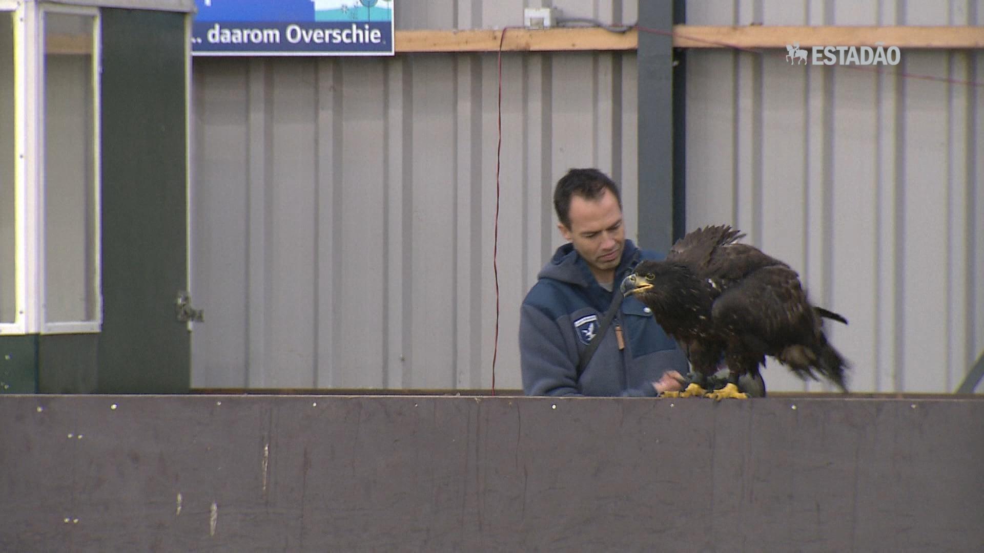 Águias são treinadas para capturar drones