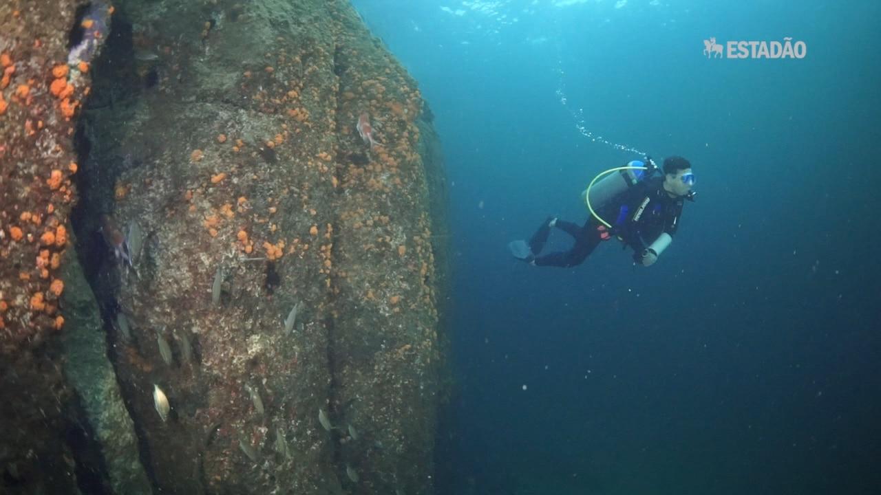 Alcatrazes: A ameaça do coral-sol