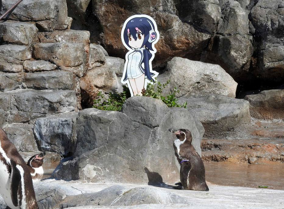 Morre pinguim do Japão que era apaixonado por personagem de anime