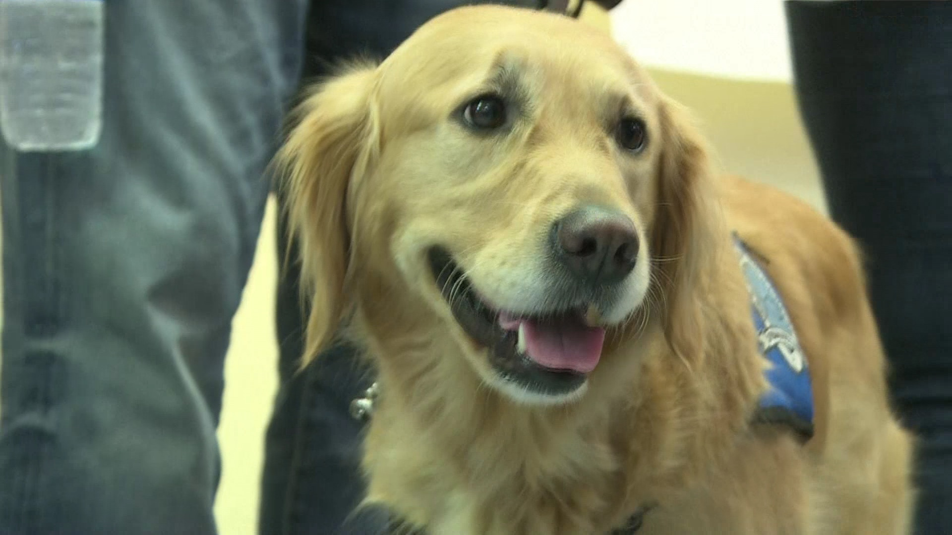 Cães ajudam famílias das vítimas do massacre nos EUA