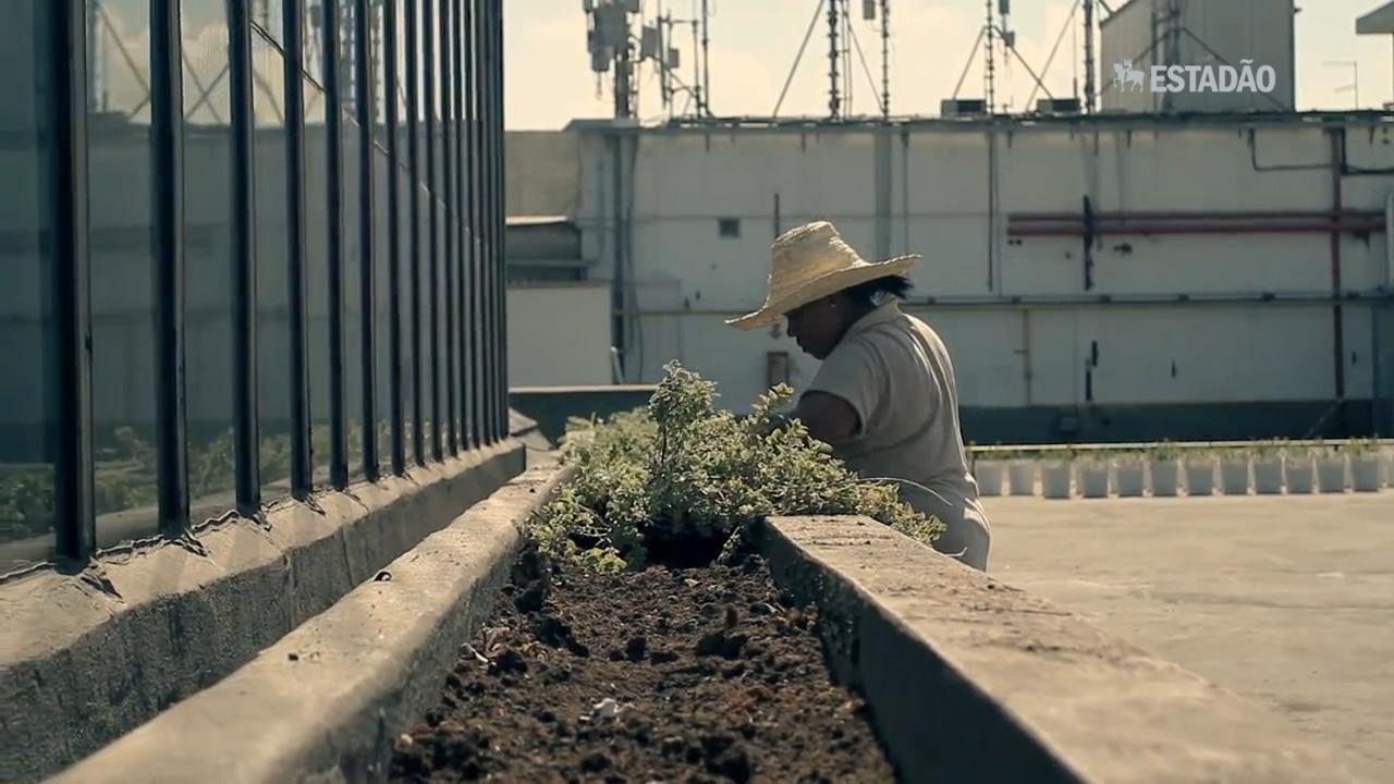 As profissões ligadas à Agricultura Urbana
