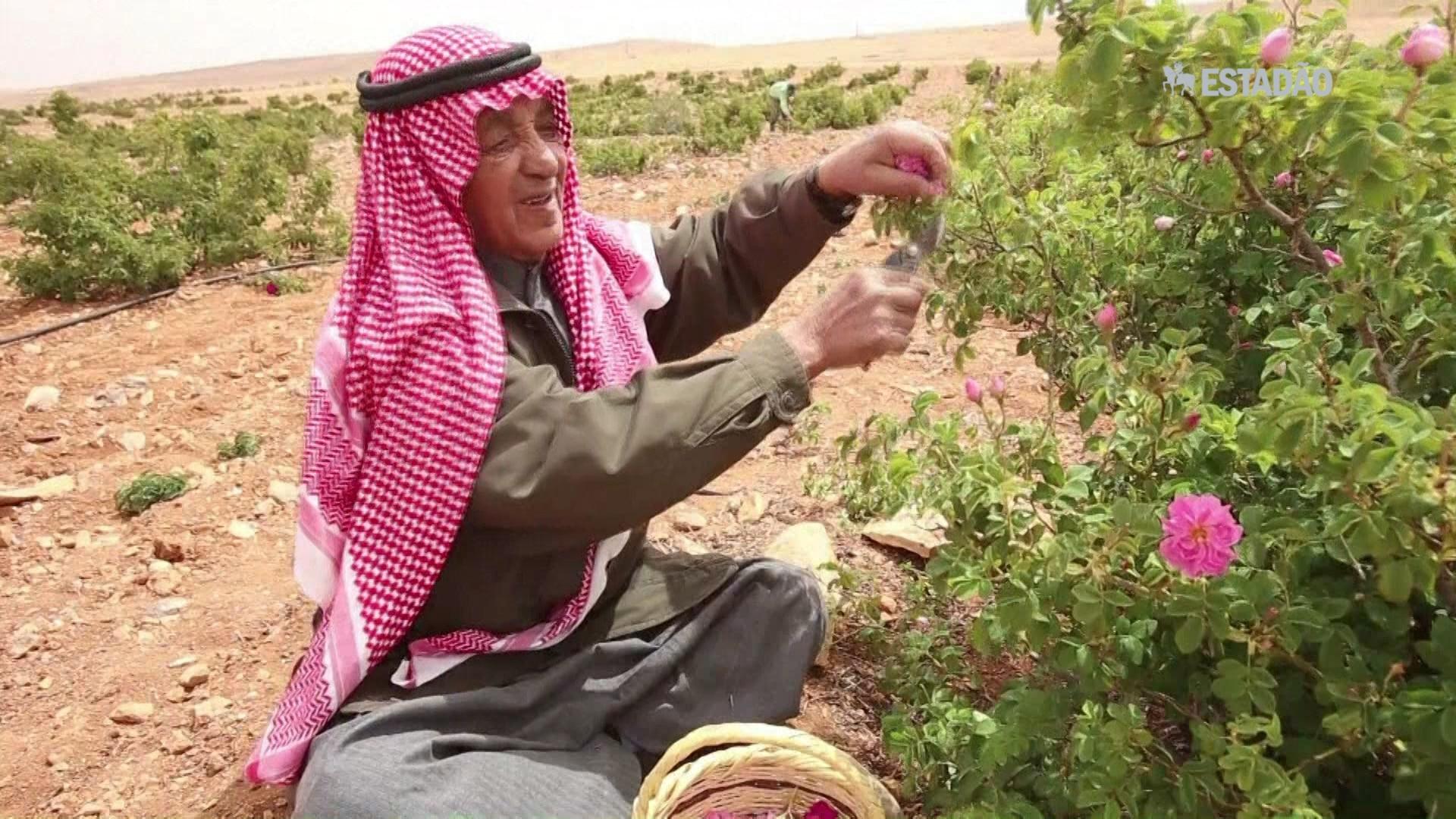 Guerra na Síria afeta produção de rosas de Damasco
