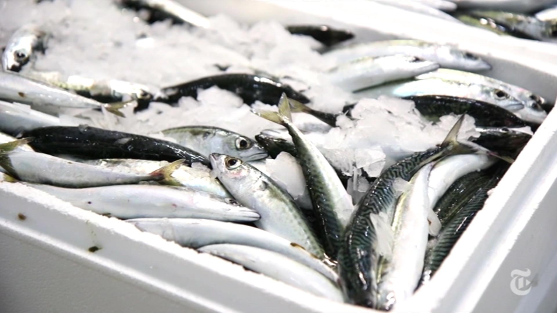 A crise grega no mercado de peixes