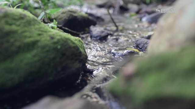 Projeto em Extrema (MG) evitou o sumiço de 700 afluentes do Cantareira durante a seca