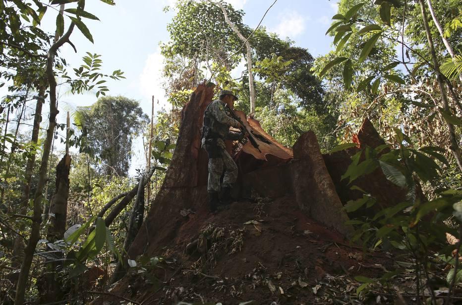 ctv-q6m-amazonia