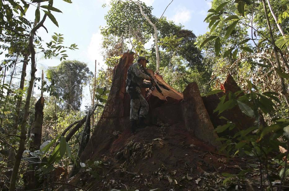 Câmara corta mais 101 mil hectares do Parque Nacional do Jamanxim, na Amazônia