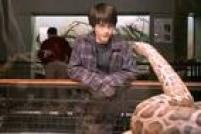 """Ele fazia isso desde o primeiro livro, quando libertou uma jiboia de um tanque num zoológico, mas foi apenas em """"Harry Potter e a Câmara Secreta"""" que a ofidioglossia (capacidade de falar com cobras) de Harry tornou-se pública. A tensão do mundo bruxo em relação a esse fato se deu porque essa era uma característica de Voldemort. Após ele morrer, junto com todas as suas Horcruxes (inclusive a que habitava Harry), Potter perdeu esse dom."""