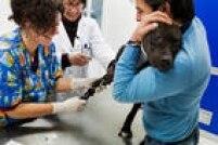 Alguns contribuintes tentaram aumentar as deduções com gastos em veterinários