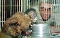 """""""É impossível abolir o uso de animais, especialmente para o teste de fármacos"""", afirma Marcelo Morales, da Sociedade Brasileira para o Progresso da Ciência (SBPC). Embora concorde que nem sempre os resultados obtidos com animais sejam válidos para os humanos, Morales diz que a presença dos bichos em testes é fundamental para que os riscos às pessoas sejam minimizados. """"Se não testássemos em ratos, não chegaríamos aos cães com segurança. E se não fizéssemos com cães, não chegaríamos aos humanos."""""""