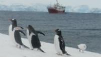 Depois da Patagônia, o turismo expandiu suas fronteiras ainda muito mais ao sul. A Antártida tem sido o destino gelado mais inusitado dos últimos tempos e, com pinguins, leões e elefantes marinhos no quadro, você não vai nem pensar em filtros ou Photoshop.