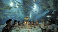 Tourists have dinner as fish swim around them, at the Tianjin Haichang Polar Ocean World in Tianjin, September 1, 2014. Picture taken September 1, 2014. REUTERS/Stringer (CHINA - Tags: TRAVEL SOCIETY ANIMALS TPX IMAGES OF THE DAY FOOD) CHINA OUT. NO COMMERCIAL OR EDITORIAL SALES IN CHINA