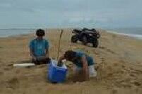 Técnicos da Tamar fazem a transferência de ovos para um lugar mais seguro antes de a lama chegar à foz do Rio Doce, ao fundo