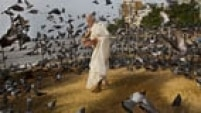 An Indian man feeds pigeons in Mumbai, India, Sunday, Sept. 7, 2014. (AP Photo/Bernat Armangue)