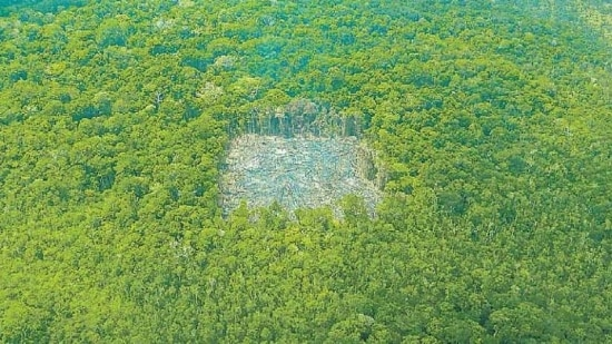 Em alta. Rondônia e Pará foram os Estados mais atingidos pelo desmatamento em setembro