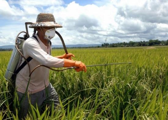 As intoxicações agudas por agrotóxicos atingem os trabalhadores rurais, que sofrem com irritação da pele e olhos, cólicas, diarreias, dificuldades respiratórias, convulsões e morte